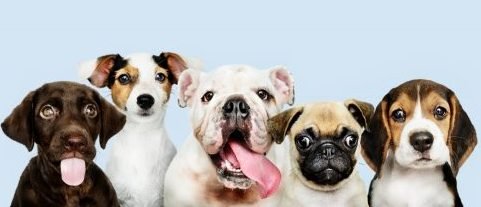 regalos para perros regalos para cachorros regalos personalizados para perros